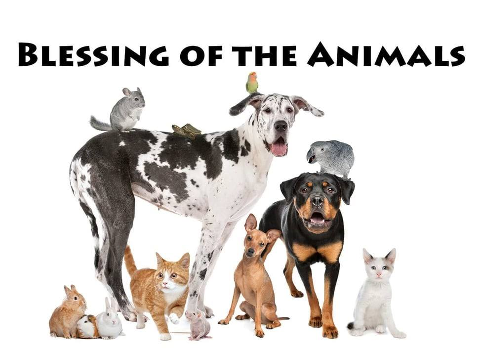 Blessing of the Animals - St  Andrew's Episcopal Church